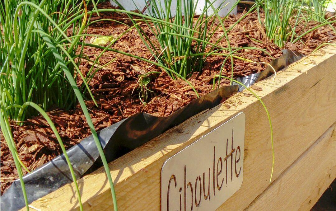 Bac de jardinière en bois