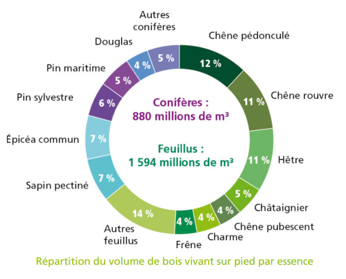 volume des essence de bois en France