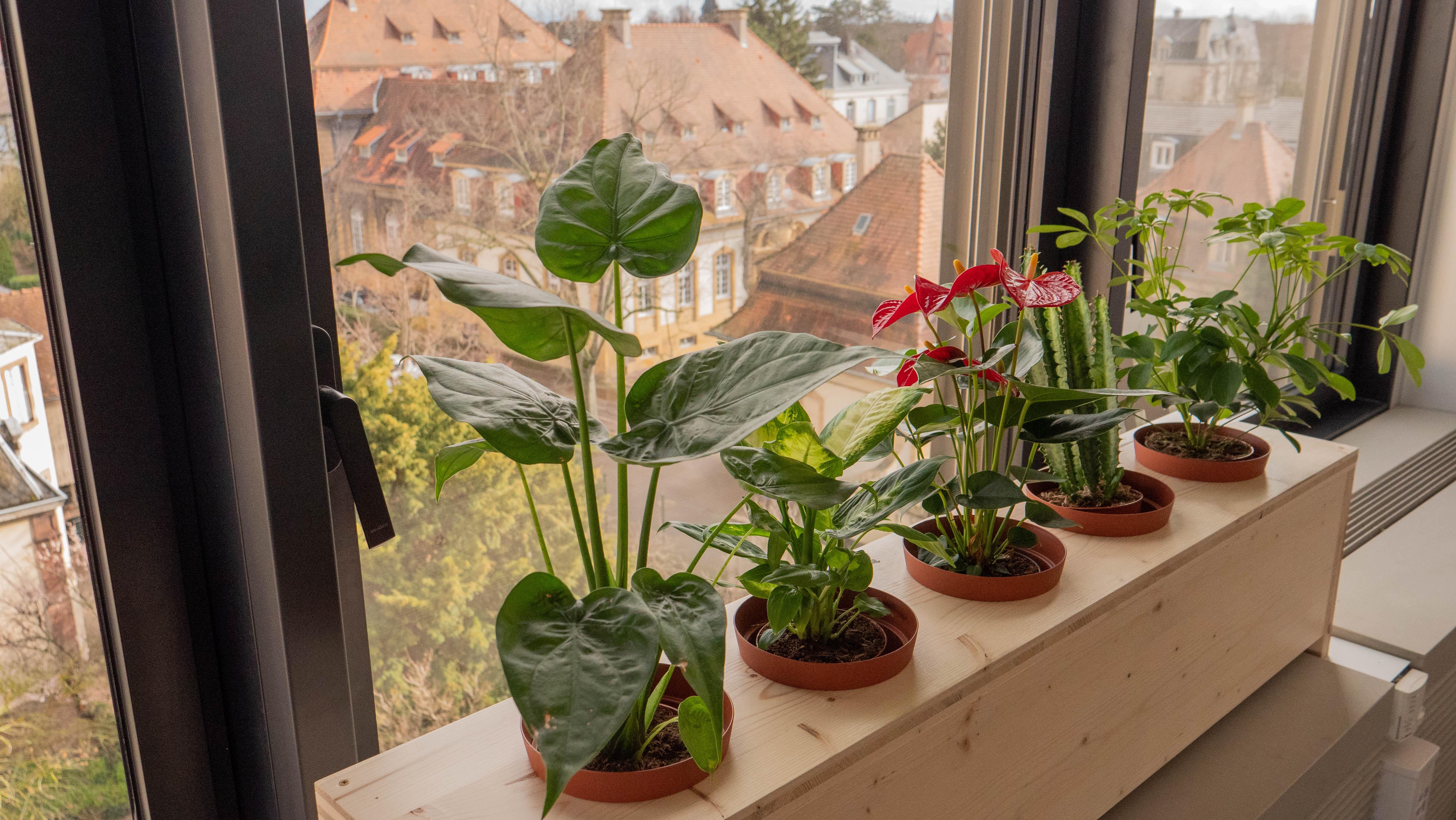 instalaltion des plantes sur le porte plante en bois