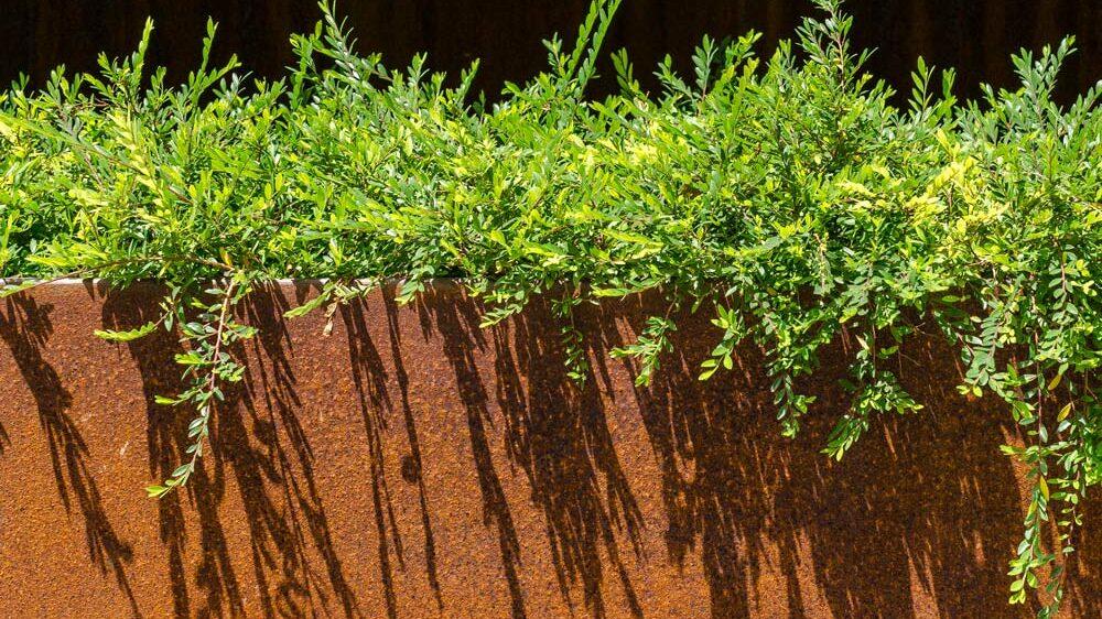 photo d'une plate bande en acier corten pour son jardin